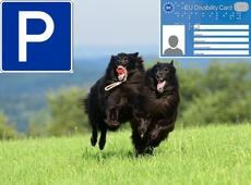 Parkeren, mindervalidenkaart en hondenweide
